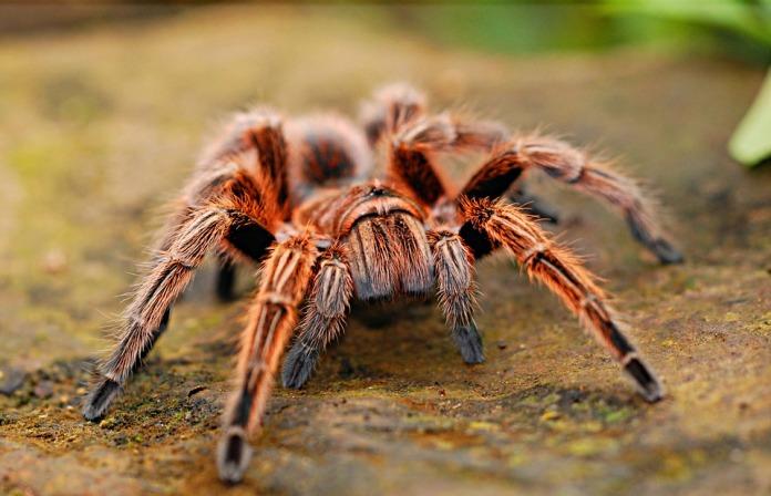 spider-2740997_960_720